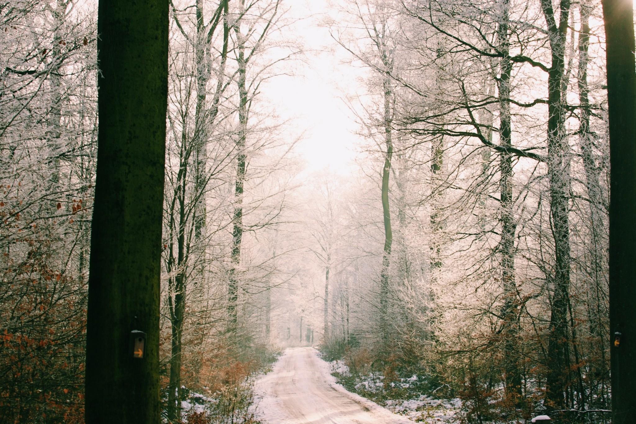 Koblenzer Wald